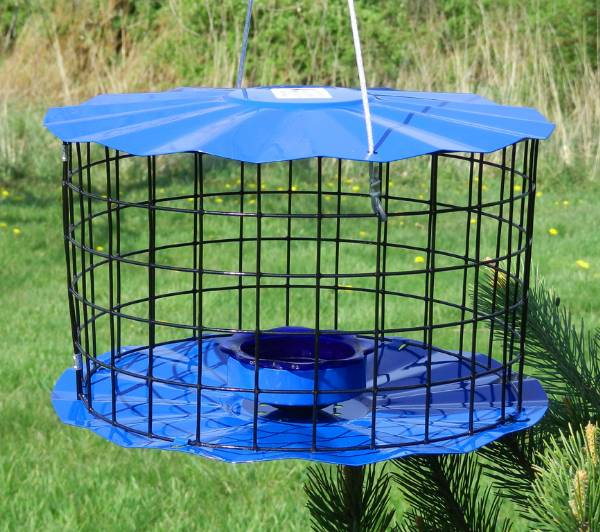 bluebirdpreferences like do feeders feeder com types blog what bird for of bluebird bluebirds birdhousesupply