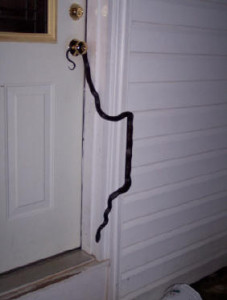 Another Black Rat Snake climbing the door frame of a house. Notice he's not having any difficulty negotiating the vinyl siding! (Photo courtesy Terry Arn)