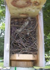 House Wren Nest in Bluebird nestbox. Made mostly of sticks, may contain spider egg sacks. (Photo courtesy Bet Zimmerman)