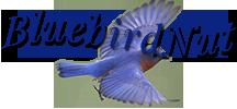 Bluebirdnut