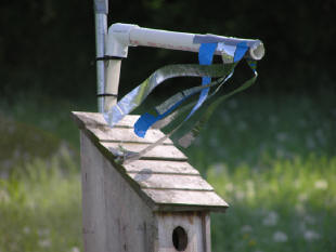 Due to a number of reports of Sparrow kills in TRES boxes in recent years, some experimentation has been done with using Sparrow Spookers on nestboxes where Tree Swallows were nesting.