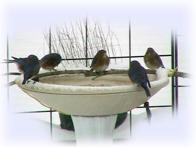 winter_birdbath
